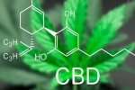 CBD Cream for Pain – Benefits & Instructions