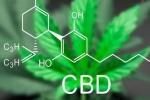 CBD Cream for Pain Management