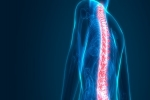 Facts And Tips about PRP Injection for Back Pain